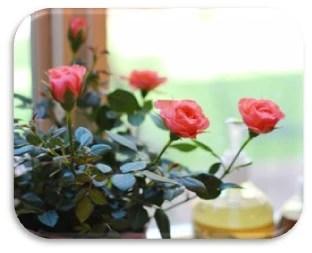 24.- rosa miniatura