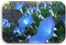4.- manto azul