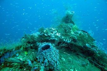 The heavily encrusted bow of the steamer Roraïma at a depth of 30 m (100 ft). Photo © Jeffrey Gallant | Diving Almanac