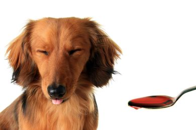 Fenbendazole use for Canine Wormers