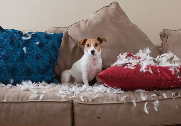 3 Questions to ask Yourself Before Getting a Dog