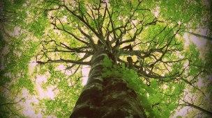 Árvore do conhecimento e menu de tópicos do nicho do blogueiro