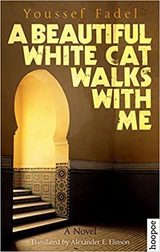 Beautiful White Cat Walks with