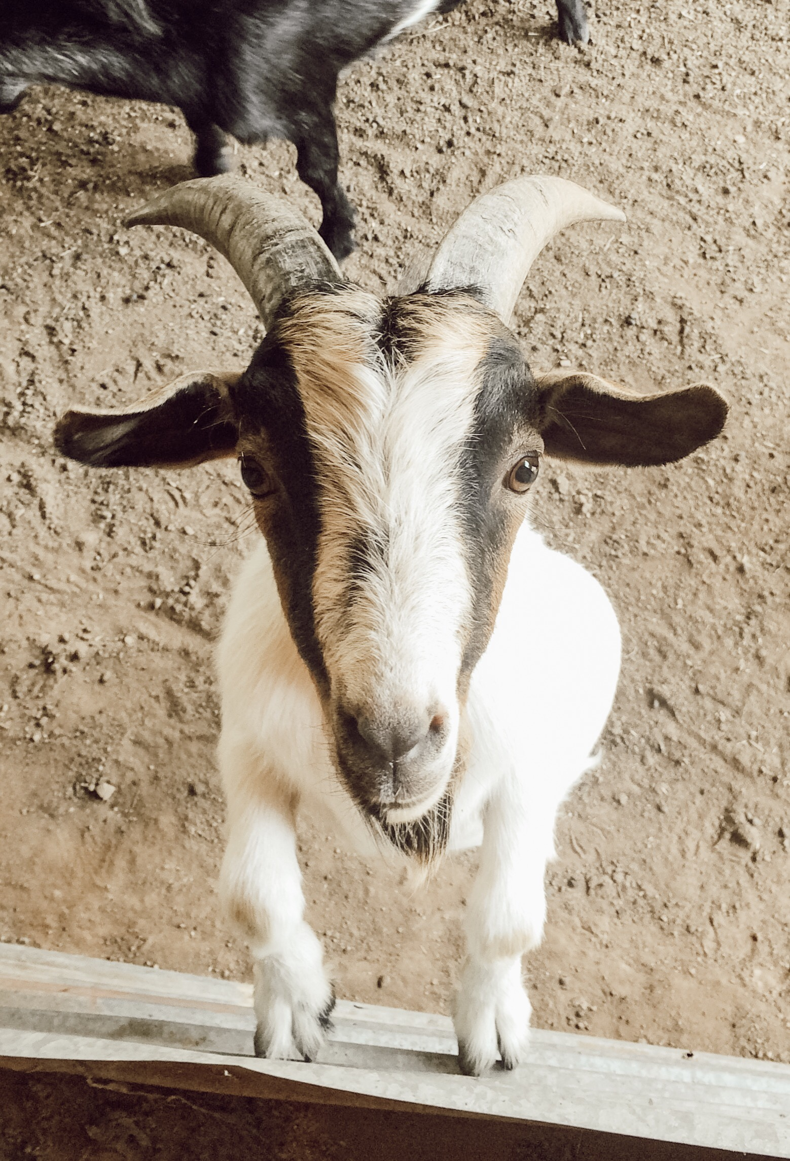 You Have Goat to be Kidding Me