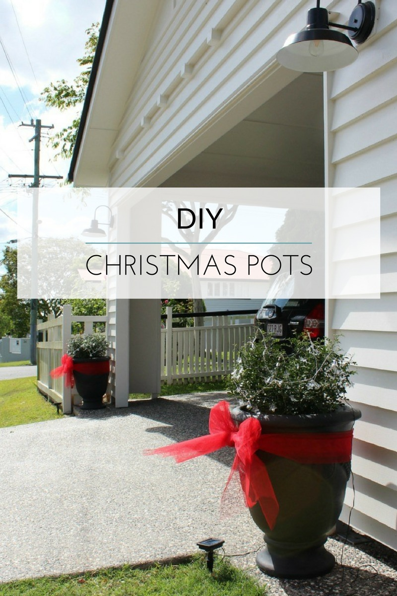 christmas potted plants