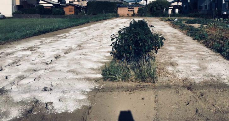 畑に石灰をまいて土の酸度を調整