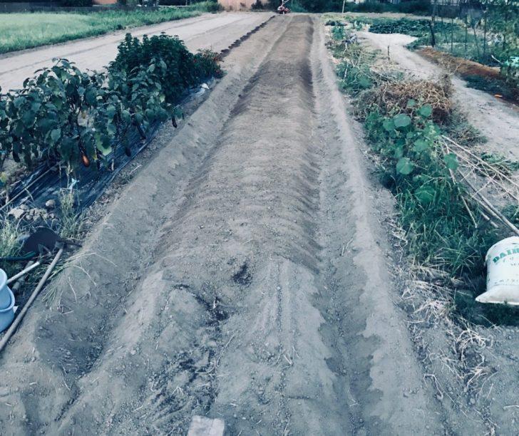 土をクワでならし終わった後の畝
