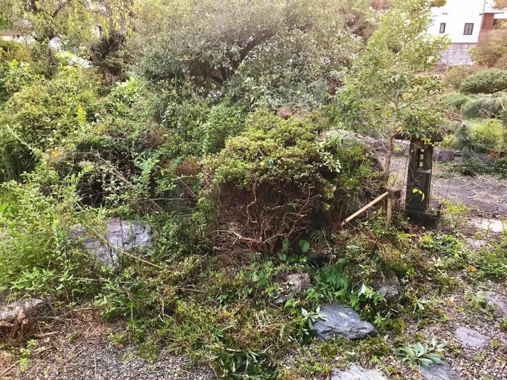 玄関横の伐採した庭木