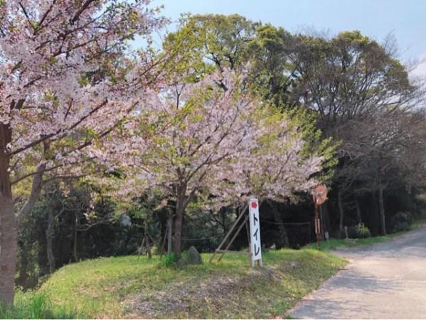 春の花まつりの入り口にある桜が綺麗