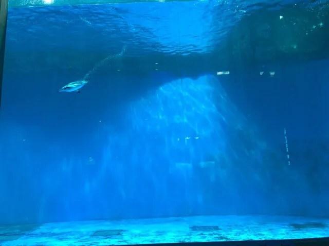 ペンギン水族館のペンギンプール
