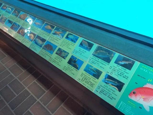 ペンギン水族館はペンギン以外も見所いっぱい