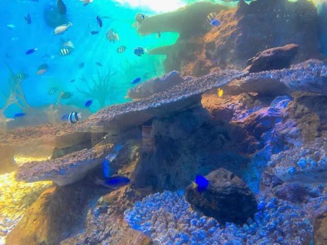 ペンギン水族館の長崎で見れる魚たち