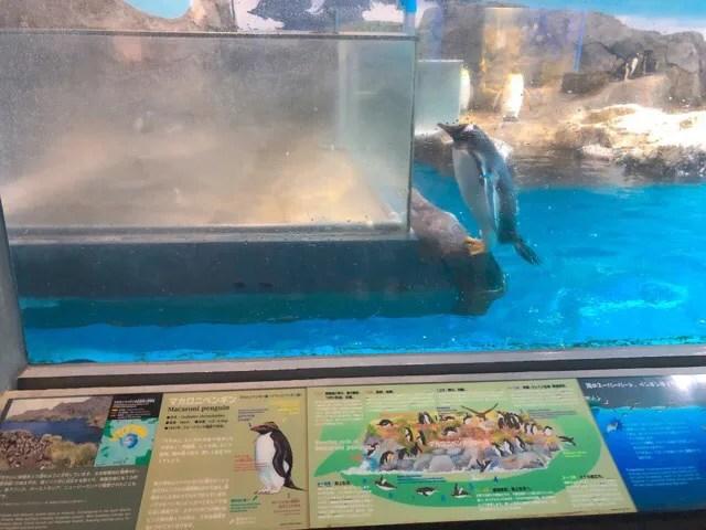 ペンギン水族館2階のペンギン