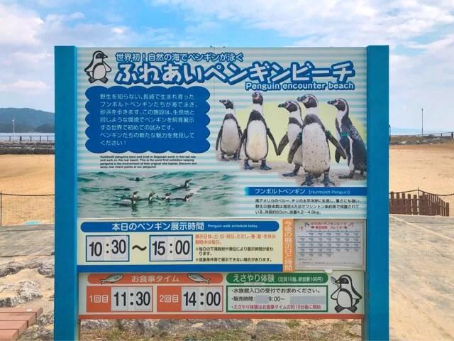 ペンギン水族館の外にはふれあいペンギンビーチがある