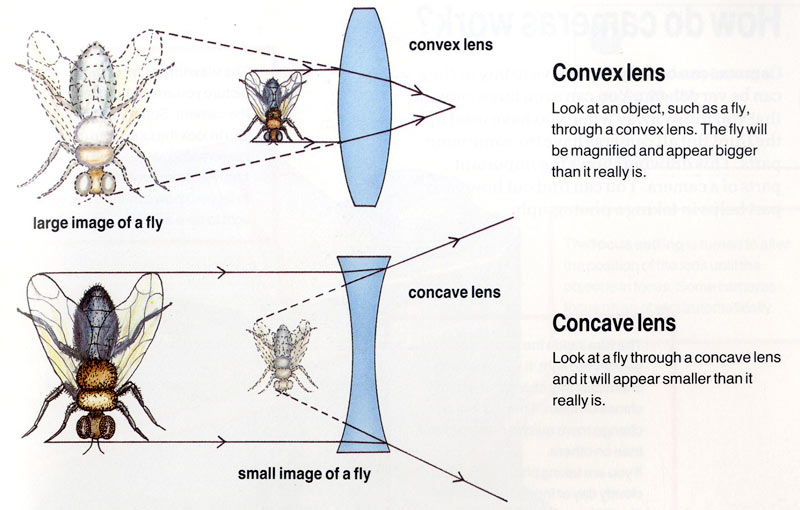 What are Convex and Concave lenses?