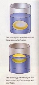 Simple egg freshness test