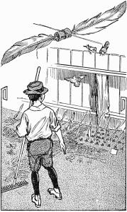 How to Keep Birds Away From Garden –  A Garden-Bed Scarecrow
