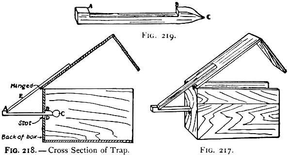 A box trap - How to Build a Squirrel Trap