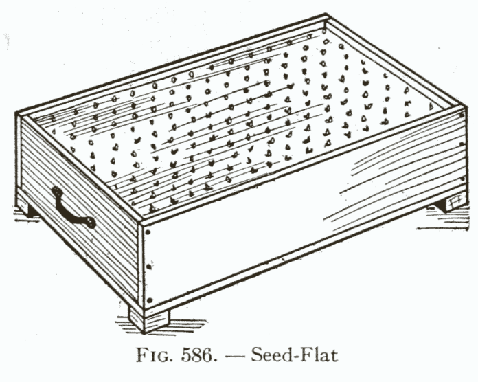 How to make a seed box for agriculture and paper pots