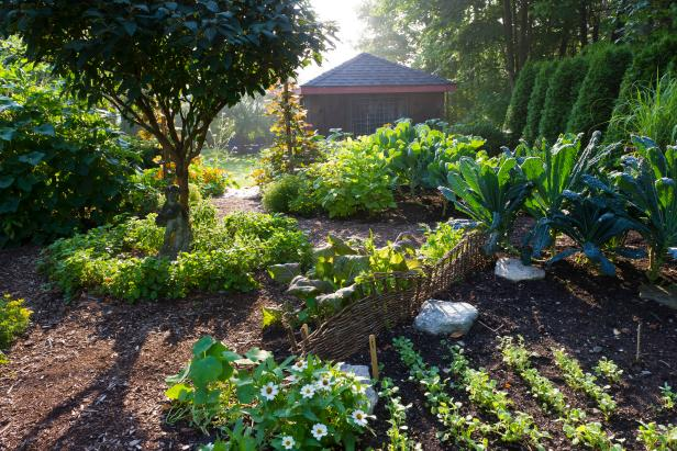 Vegetable Garden With Unique Design