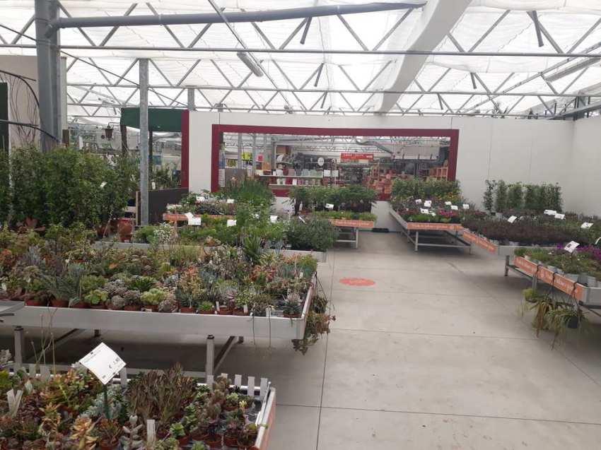 Nicora Garden