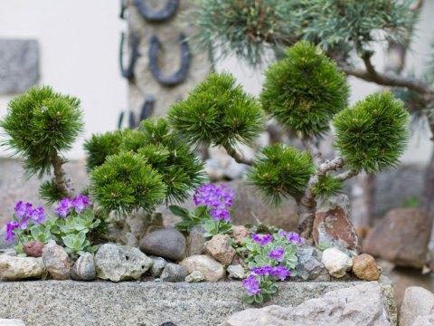 pflanzen für steingarten steingarten gestalten – tipps für das eigene steinbeet