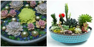 19 Unique Ways to Show Off Your Succulent Plants