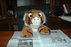 Stuffed animal reading the business section
