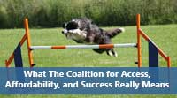 Dog jumping obstacles representing What The Coalition for Access, Affordability, and Succes college application really means