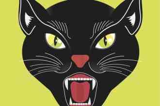 ddm black cat