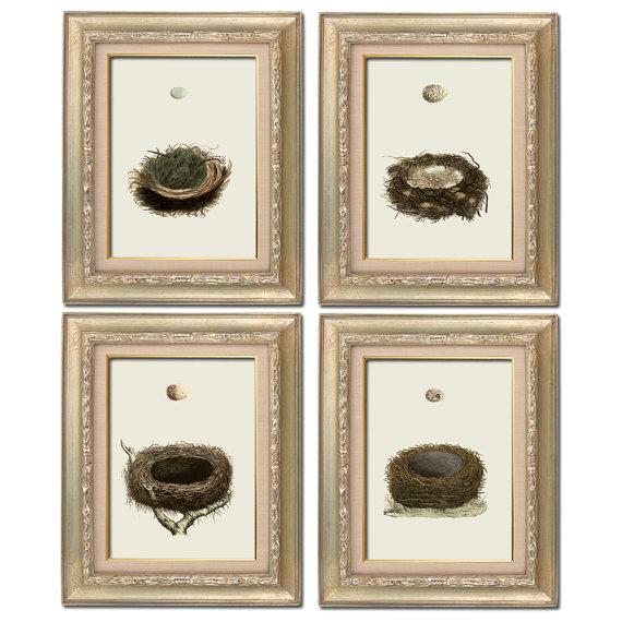 Vintage Bird's Nest Set of Four Digital Download: 8×10 sized images, similar to Restoration Hardware Baby by RhineandStone