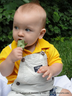 Baby eating leaves in a photo.