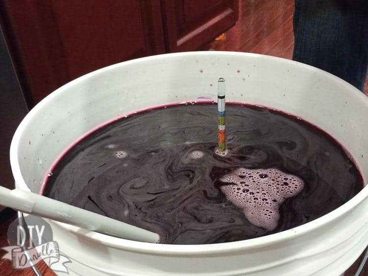 Homemade wine made from a kit. This is still in the 4 week process of being made.