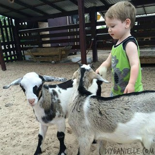 Petting Zoo: Coconut Bay Resort in St. Lucia
