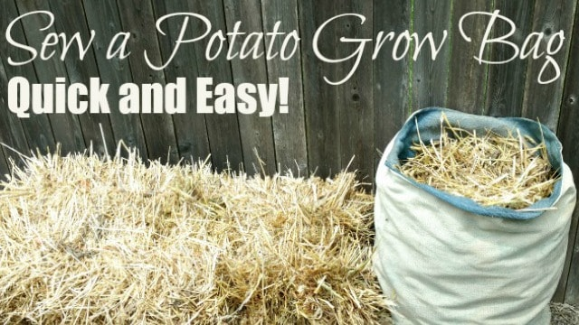 how to grow potatoes in a potato bag