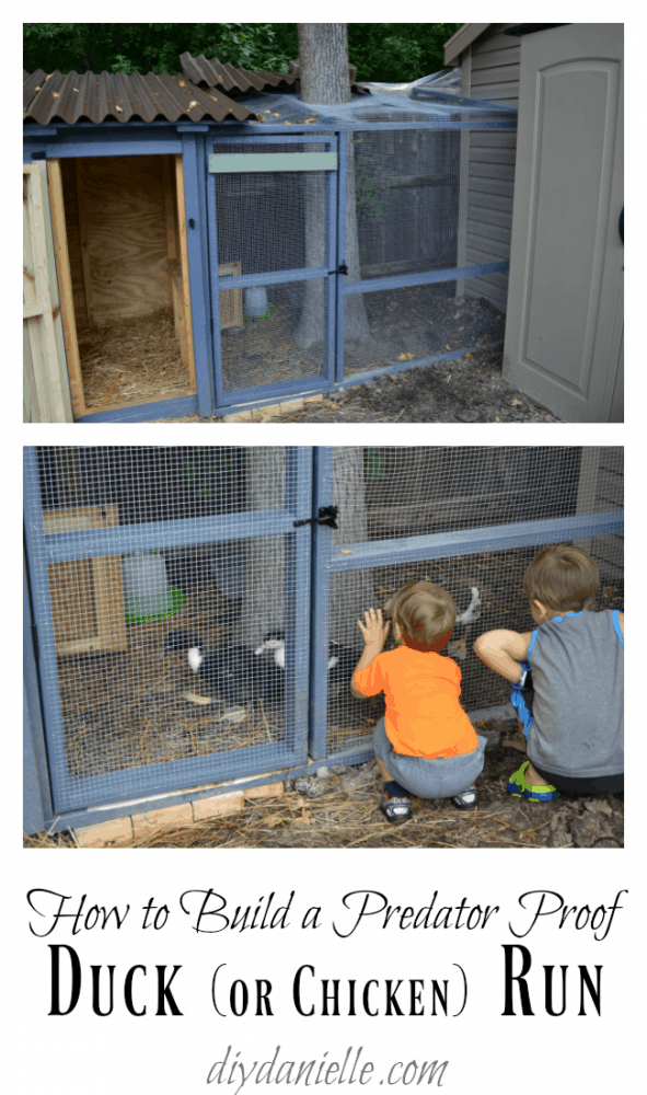 predator proof chicken run