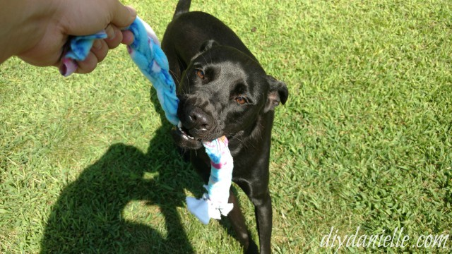 Save money, make your own dog toys!