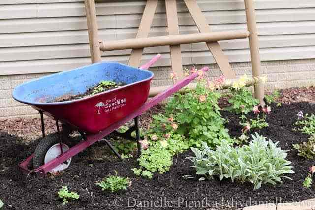 Full view of the decorative fence, upcycled wheelbarrow, and columbine plants.