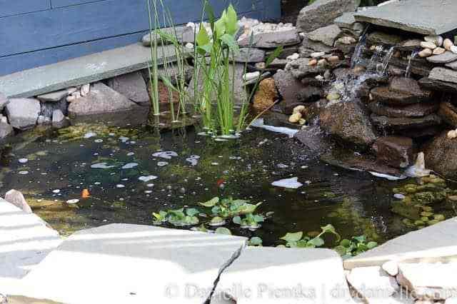 Setting up a small backyard pond.