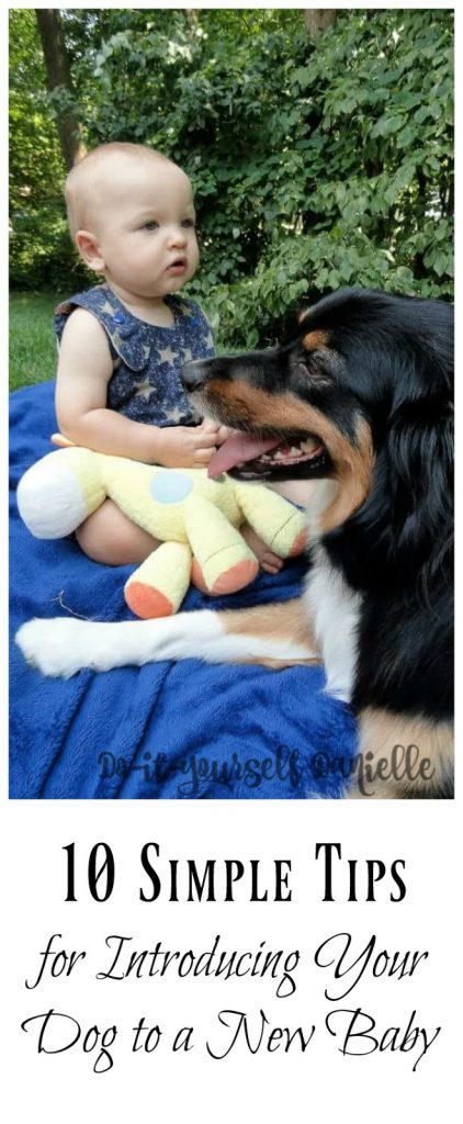 Ideas to make transitioning easier on your dog when you bring home a baby.