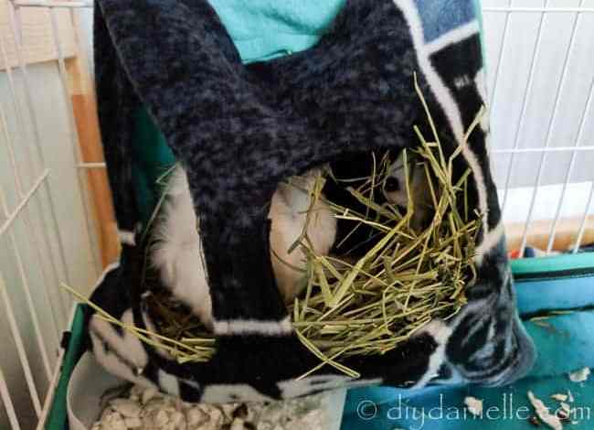 How to Make a Guinea Pig Hay Bag