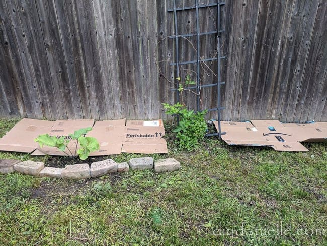 Cardboard as a weed barrier in the garden.