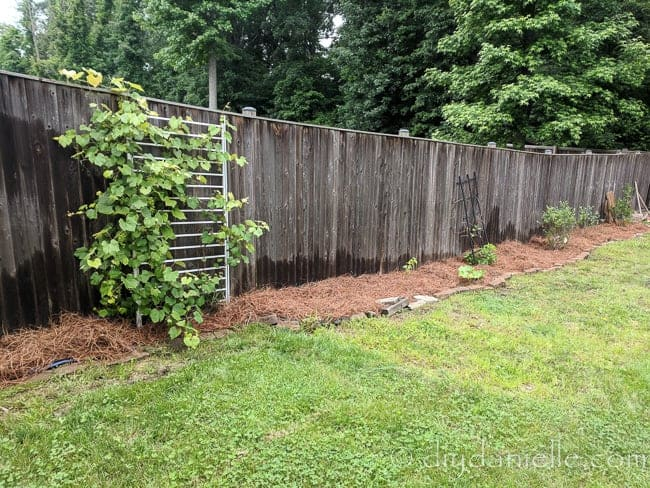 Creating garden beds and mulching them with pine straw as an alternative to wood mulch.