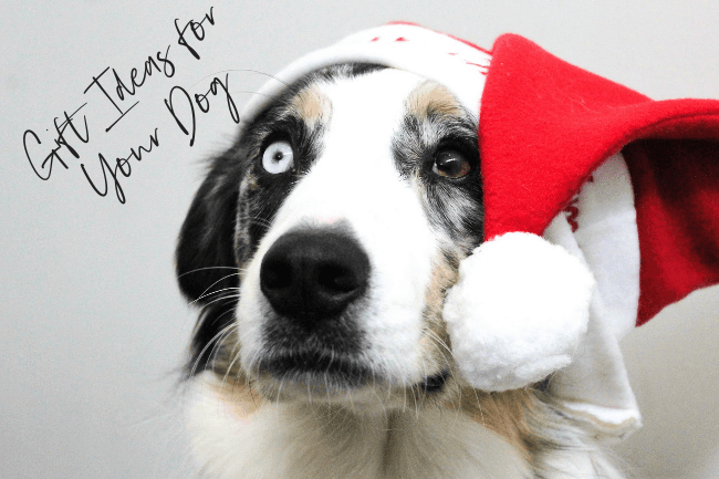 Best gifts for dogs for 2018.