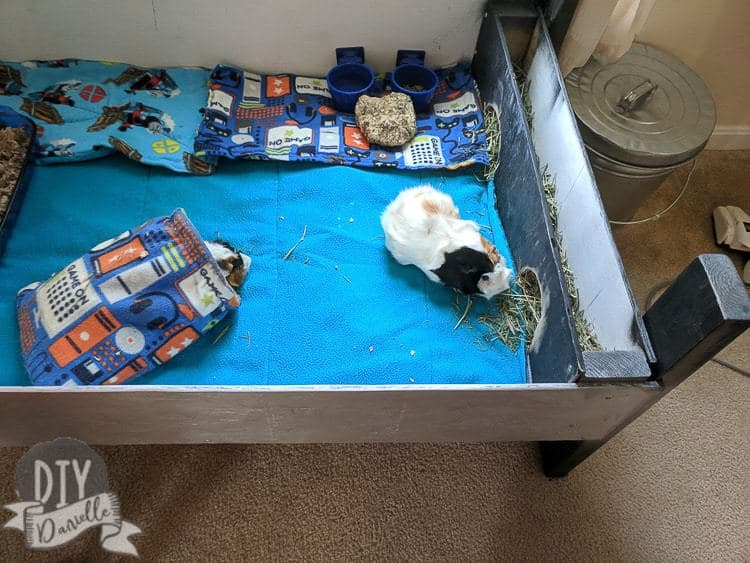 Guinea pigs in a large wood guinea pig cage that I built. Fleece bedding.