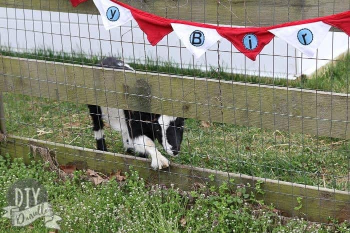 Red white and blue birthday banner hanging off a fence with a goat looking through the fence.