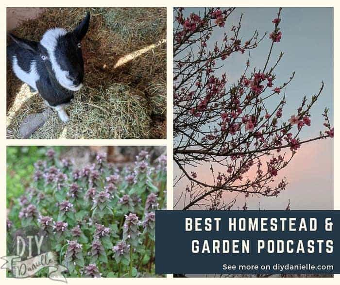 Best homestead and garden podcasts if you want to learn more about homesteading, gardening, and permaculture.