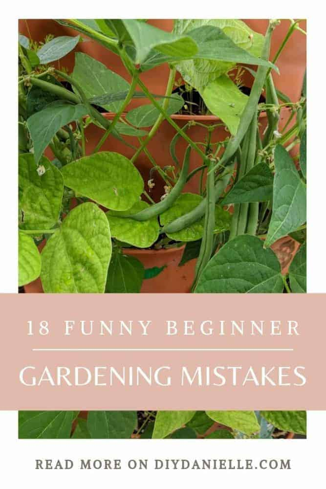 18 funny beginner gardening mistakes to learn from!