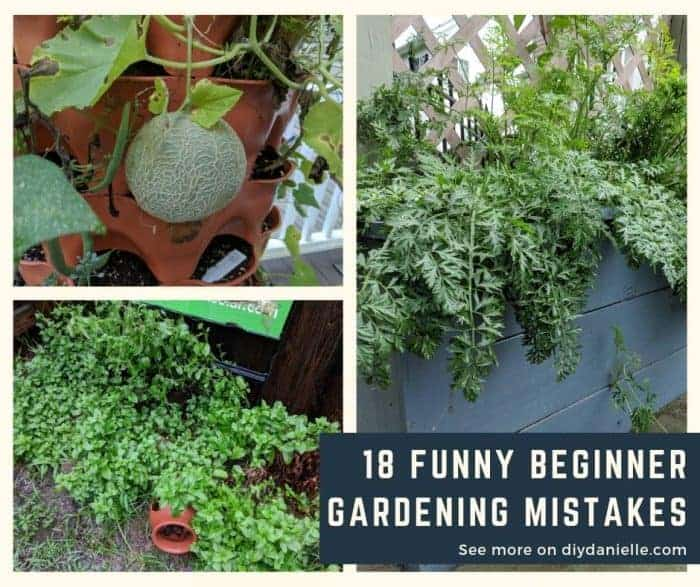 Garden mistakes to avoid making when you start your garden.