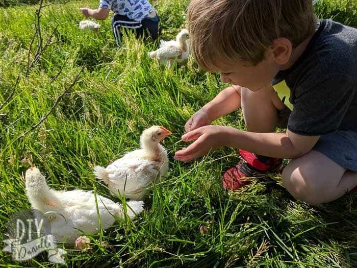Kids playing with the chicks.
